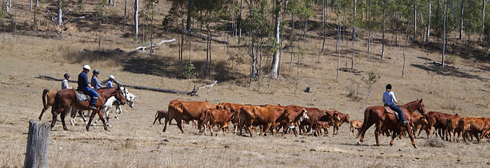 Farm Work: Cattle Mustering
