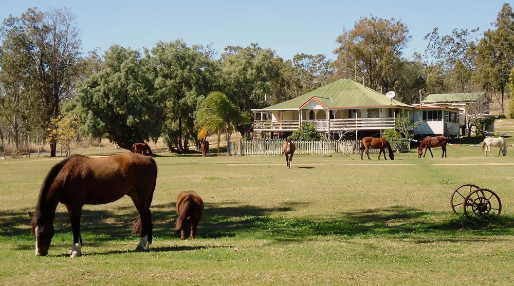 Farm house at the training farm with horses in front